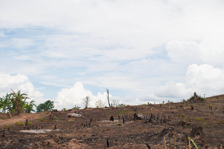 Scorched trees and grass after the fire in the northern part of Thailand.