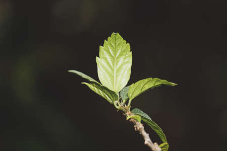 young leaves of a tree