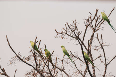 Social distancing among parrots(parrots sitting on separate branches of tree) Stockfoto