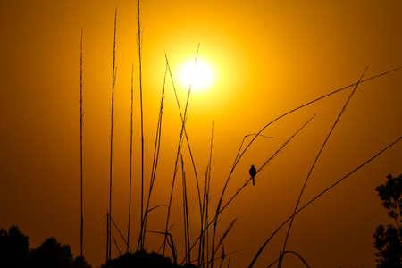 Small bird watching the sunrise