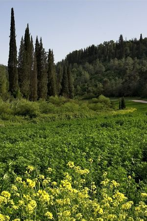 A forest meadow among cypresses and spruces Stock Photo - 555004