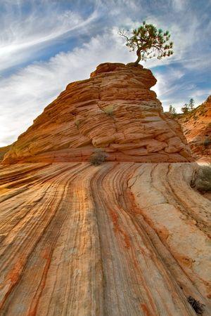 Rock and Tree. National park Zion. Utah Archivio Fotografico
