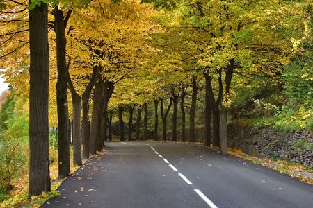 Autumn avenue Highway, passing between autumn trees with yellow leaves