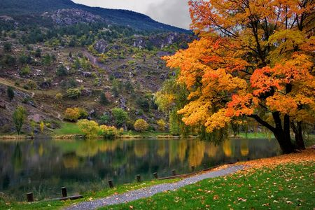 Orange and yellow leaves by the lake   Stock Photo