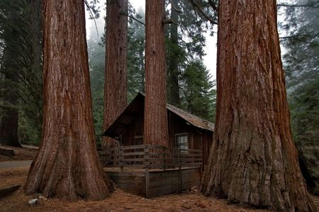 Small rangers house in Sequoia Park  photo