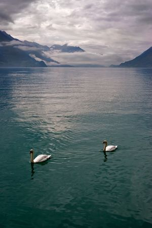 Bright lake and swans in Switzerland mountains  photo
