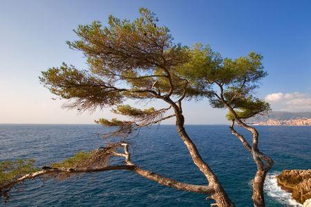 Mediterranean sea at coast Mentony photo