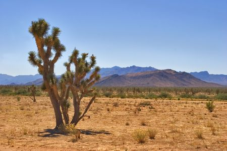 A cactus growing in huge desert in state of Utah, the USA Stock Photo