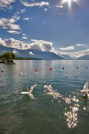 Lake Leman in fine autumn day and  swans. photo