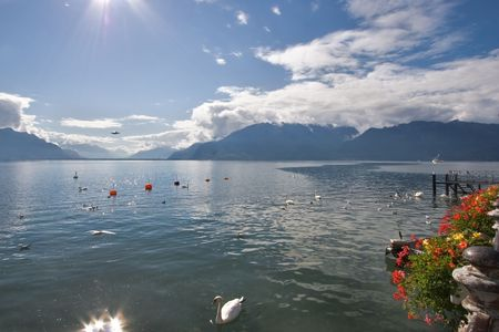 Lake Leman in fine autumn day and floating swans photo