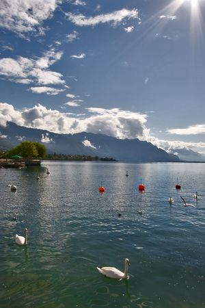 Lake Leman in fine autumn day and floating swans. photo