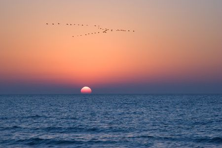 Flight of birds of passage on a sunset above Mediterranean sea Stock Photo - 967664