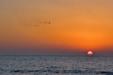 Flock of birds of passage on a sunset above Mediterranean sea photo