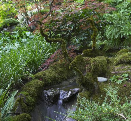. Acquired a moss curved branches above a small falls in Japanese  garden in the big park photo