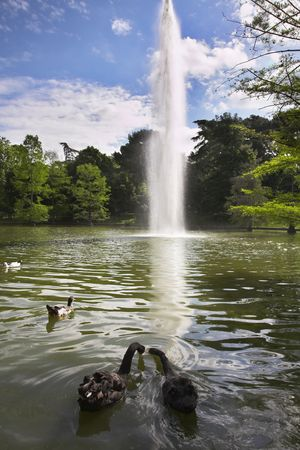 Swans and ducks in fine lake with a fountain in park Buen Retiro photo