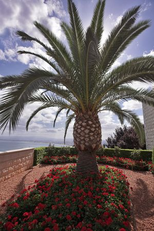 architectural survey: Charming architectural ensemble in Bahai gardens: a survey marble ground with flowers and palm trees