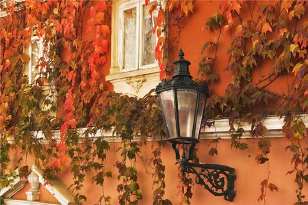 Autumn leaves on walls of old Prague