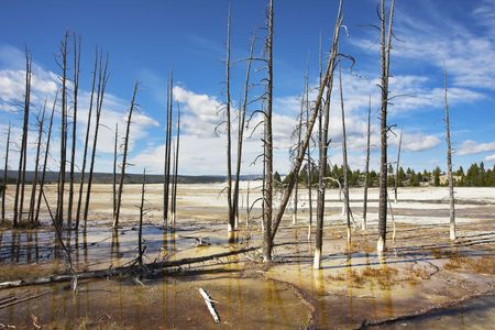 The dried up trunks of trees on a surface of hot thermal mineral lakes photo