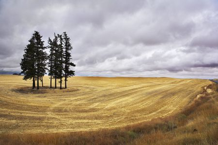 Huge field in state of Montana after a harvest. photo