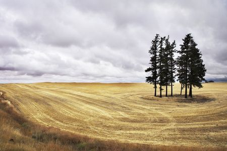Huge field in state of Montana after a harvest.