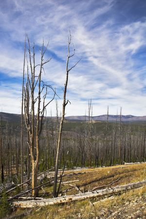 The rests of the lost forest and stubs on slopes of gorge in clear day. More magnificent pictures from the American and Canadian National parks you can look hundreds in my portfolio. Welcome! photo