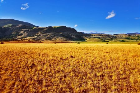 Boundless fields on the American farms Stock Photo - 3795441