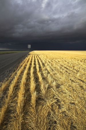 Wheaten fields of Montana after harvesting before a thunder-storm Stock Photo - 3816794