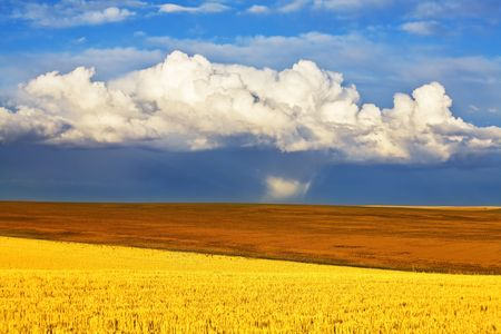 Huge field in the autumn after a rain Stock Photo - 3816784