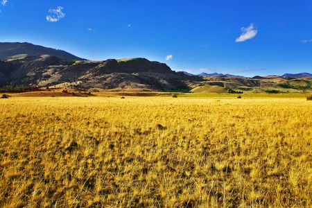 Boundless fields on the American farms Stock Photo - 3891330