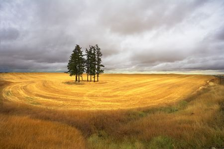 Huge field and some pines in Montana after a harvest photo