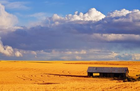 Empty wooden shed in field after harvesting Stock Photo - 3939393