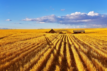 midday: Solar autumn midday on fields of Montana Stock Photo