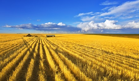 Solar autumn midday on fields of Montana Archivio Fotografico