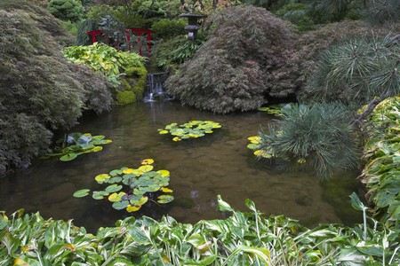 A shallow charming pond with lilies in Japanese  garden of the big park photo