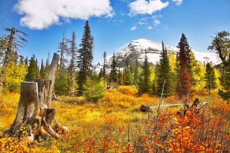 brilliant colors: Brilliant colors of autumn in cold northern reserve