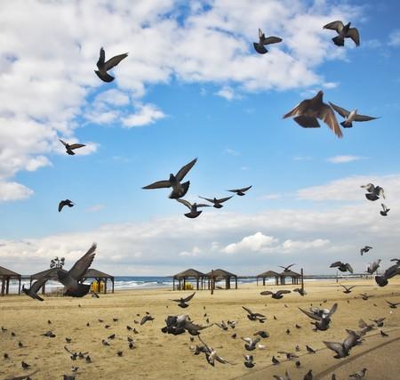 pigeons flying: El vuelo de las palomas se flied sobre la arena de una playa a un mont�n de forraje