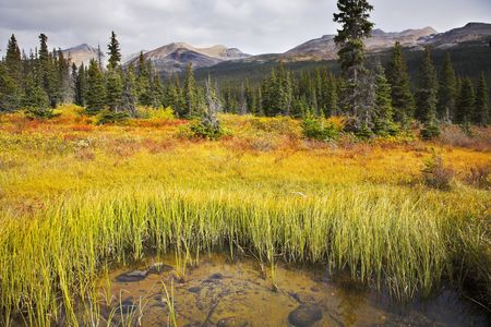 Overgrown yellow grass shallow lake in Rocky mountains photo