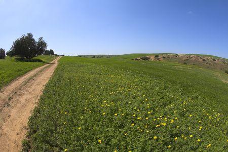 Soil rural road through a spring field Stock Photo - 4677335