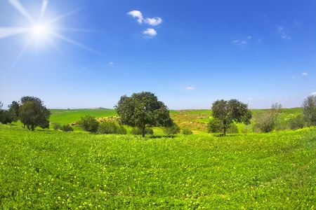 Green spring blossoming field with camomiles and trees photo