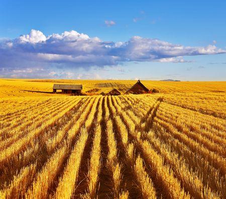 Solar autumn midday on fields of Montana Stock Photo