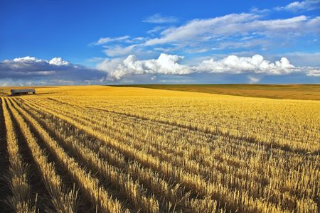 Wheaten fields of Montana after harvesting  photo