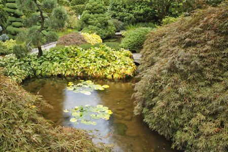 Decorative Japanese garden. A stream, small island with a grass and bushes Stock Photo - 5727655