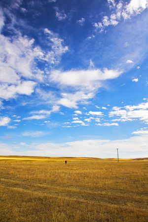 The American prairie in October. The lonely horse is grazed among boundless steppes photo