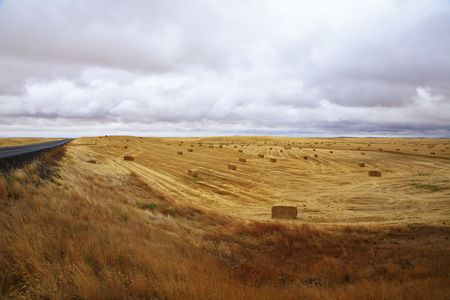 Huge fields of state of Montana after harvesting and road Stock Photo - 5750103