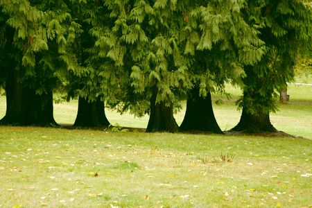 A picturesque rank of old trees in park of Vancouver photo