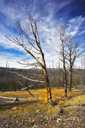 The rests of the lost wood on slopes of gorge in clear day. More magnificent pictures from the American and Canadian National parks you can look hundreds in my portfolio. Welcome! photo