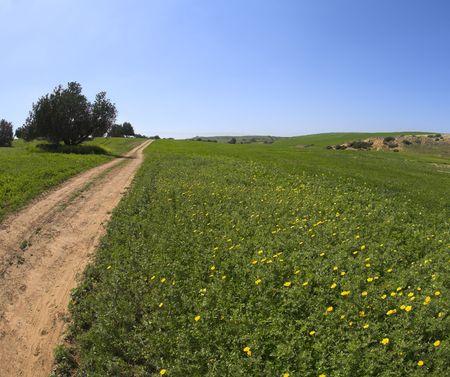 Soil rural road through a spring field Stock Photo - 6645019