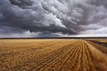 Thunderclouds above fields after harvesting. Montana, the USA photo