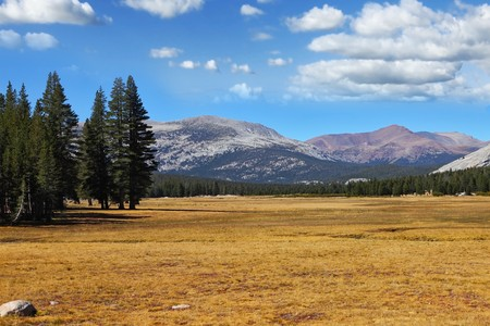 A quiet part of Yosemite Park in the early autumn - a large clearing, fur-trees and mountains photo