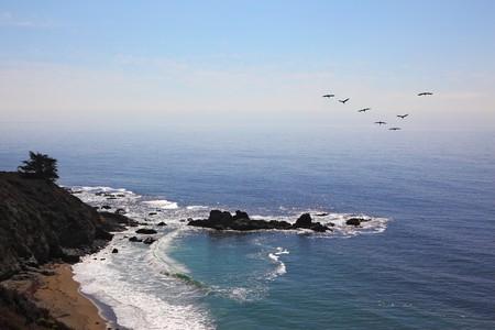 horizon over water: Triangular flight of gray pelicans over rocky coast of Pacific ocean Stock Photo
